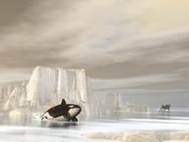 Orcas (killer whales) at the pole - 3D render Stock Photos