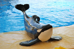 The orcas show in Loro Parque Royalty Free Stock Photography