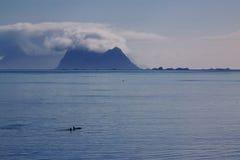 Orcaspanorama Fotografering för Bildbyråer