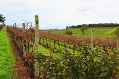 Orchad colorido del vino en Adelaide Hills Fotos de archivo