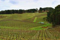 Orchad colorido del vino en Adelaide Hills Fotografía de archivo libre de regalías