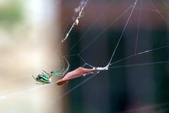 Orchadkruisspin het hangen dichtbij een droog blad royalty-vrije stock afbeeldingen
