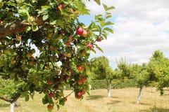 Orchand de los manzanos imagen de archivo