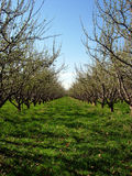 Orchard Royalty Free Stock Images