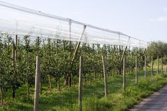 Orchard Royalty Free Stock Photography