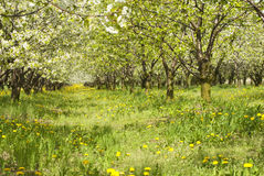 Free Orchard. Stock Photography - 32355572