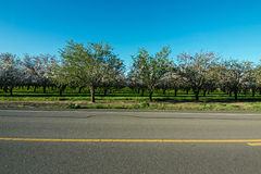 The orchard across the street Stock Photography
