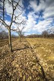 Orchard with apple trees Stock Photo