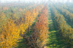 Orchard apples in fall Stock Photography