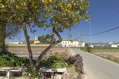 Orchard area near Valencia. Royalty Free Stock Images