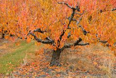 Orchard in autumn Stock Photo
