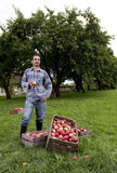 Orchard Royalty Free Stock Image