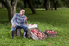 Orchard Stock Photos