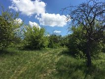 Orchard. Beautiful mixed fruit trees orchard in Ukraine Royalty Free Stock Photos