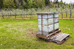 Orchard Beehives Royalty Free Stock Photos