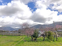 The orchard blooming on a mountains landscape on Hervas, Caceres Stock Images