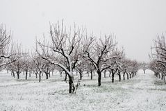 Orchard in countryside with snow Stock Images