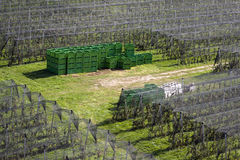 Orchard and crates Stock Photography