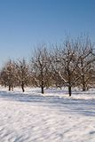 Orchard in december Royalty Free Stock Photography