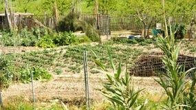 Orchard in the Delta del Llobregat Stock Photos