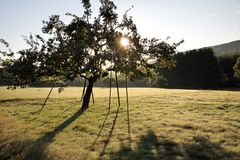 Orchard in the early summer Royalty Free Stock Photography