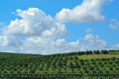 Orchard farm and sky Royalty Free Stock Image