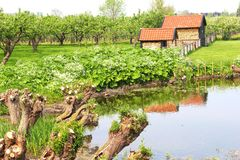Picturesque agricultural fruit-growing industries, Tricht/Geldermalsen,Betuwe,Holland. Landscape with a lake, pollard willows, orchard with fruit trees and a Stock Photo