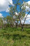 Orchard. A garden with apple and pear trees in the afternoon sun with blue skies and white clouds Royalty Free Stock Images