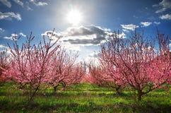 Orchard garden. Stock Photos