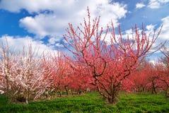 Orchard garden Stock Photos