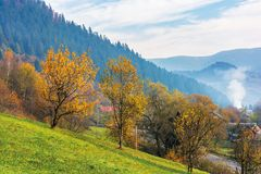 Orchard on a grassy hill in the rural valley. Trees in golden foliage. distant forest in fog. village near the road. beautiful autumn scenery in mountains stock images