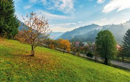 Orchard on a grassy hill in the rural valley. Trees in golden foliage. distant forest in fog. village near the road. beautiful autumn landscape in mountains royalty free stock photos