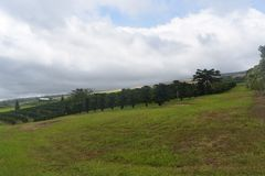 Orchard on a rolling hill with heavy cloud cover stock photo