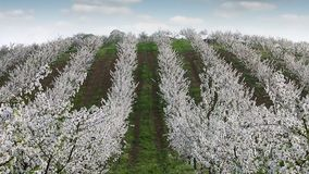 Orchard on hill landscape agriculture