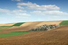Orchard on hill and plowed fields farmland landscape Royalty Free Stock Image
