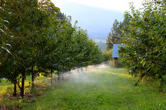 Orchard irrigation Royalty Free Stock Photography