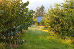 Orchard irrigation Stock Image