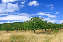 Orchard Landscape Stock Images