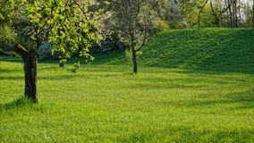 Orchard and meadow in summertime stock photography