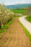 Orchard on a mountain Royalty Free Stock Photography