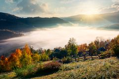 Orchard near the village on hill side. Beautiful sunrise in mountain. orchard near the village on hill side. trees in fall foliage. thick fog rise above the royalty free stock image
