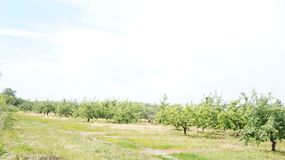 Orchard and path royalty free stock images