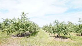 Orchard and path stock image