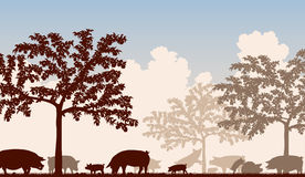 Orchard pigs. Editable vector illustration of free-range pigs feeding under fruit trees with all figures as separate objects Royalty Free Stock Images