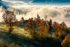 Gorgeous countryside with rising fog in valley. Orchard with reddish foliage behind the fence on hillside in autumn mountains. gorgeous countryside with rising Royalty Free Stock Images
