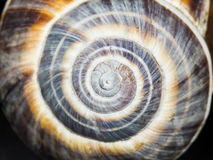 Orchard snail (Helix pomatia) - shell Royalty Free Stock Image