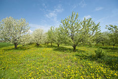 Orchard. Stock Photo