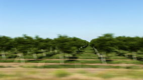 Orchard Trees Then Plowed Field From Moving Car. Rows Of Orchard Trees And Then Dirt Field From Moving Car stock video