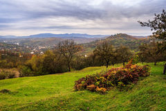 Orchard and a wild rose on mountain top in autumn Royalty Free Stock Photo