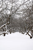 Orchard in winter Royalty Free Stock Photography